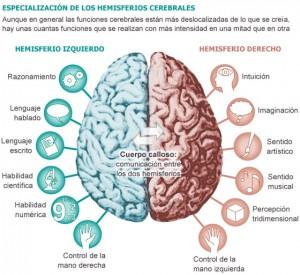 el-cerebro-humano-y-sus-funciones