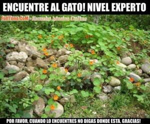 encuentra_al_gato_nivel_experto_by_daniindigo-d5dtwl9